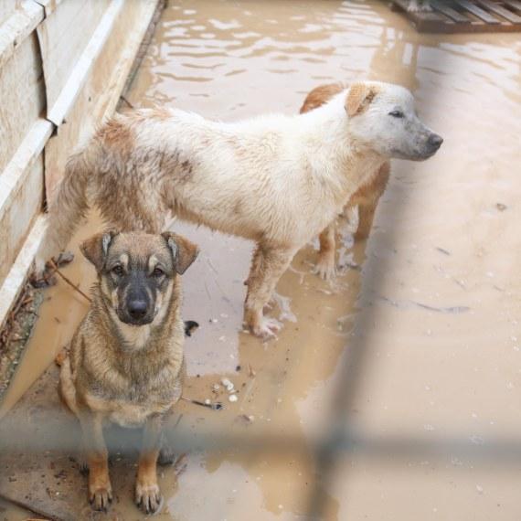 כלבים ב-'צער בעלי חיים'
