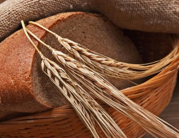 לחם וחיטה