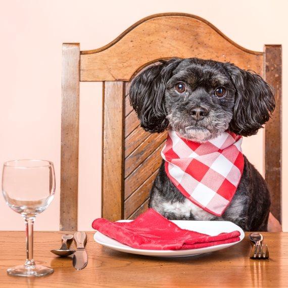 כלב אוכל