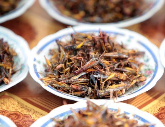 חרקים למאכל