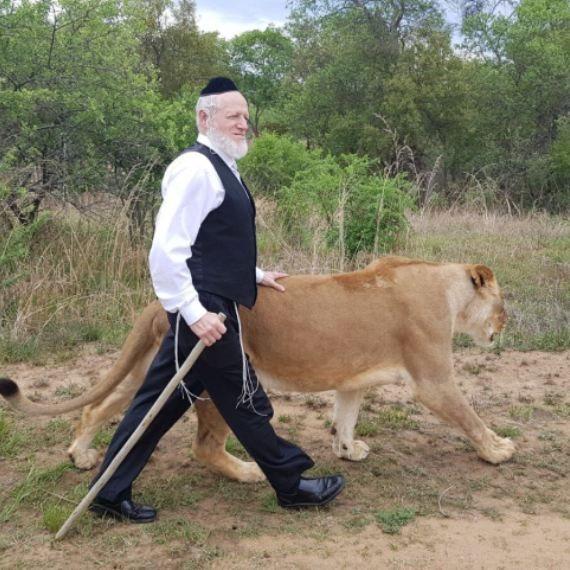 יהודה משי זהב והלביאה