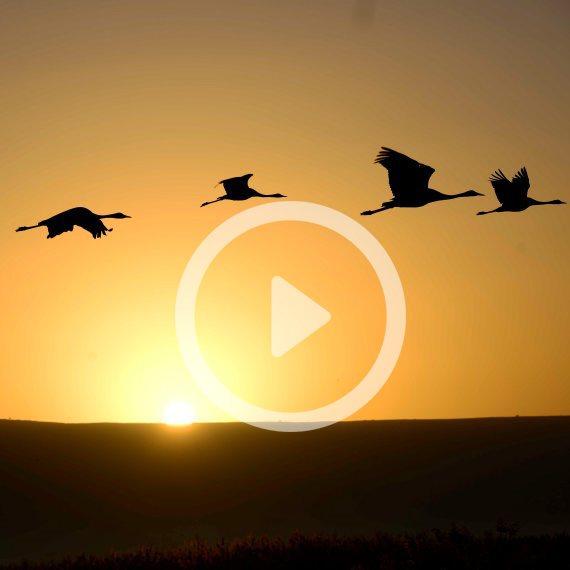 שבת עברית ציפורים נודדות