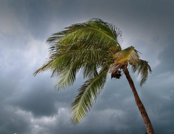 עץ דקל בגשם