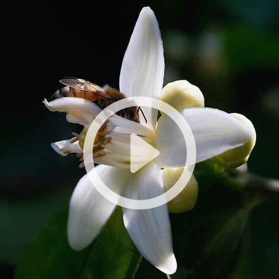 שבת עברית - שירי אביב - לחצו להאזנה