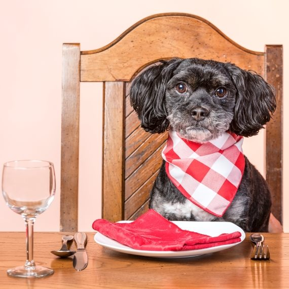 כלב מנומס אוכל