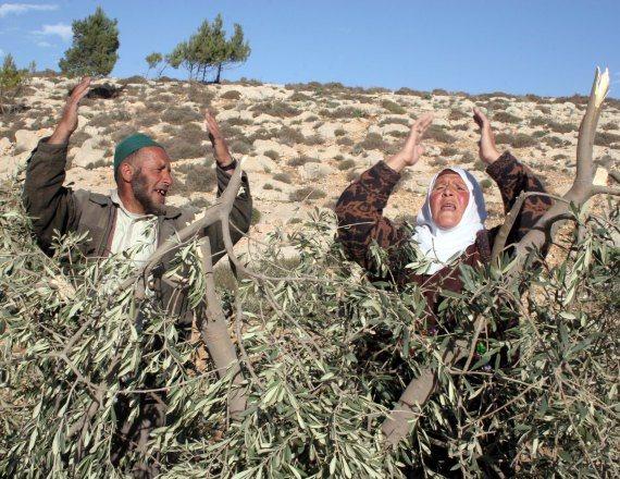 חקלאים פלסטינים - למצולמים אין קשר לכתבה