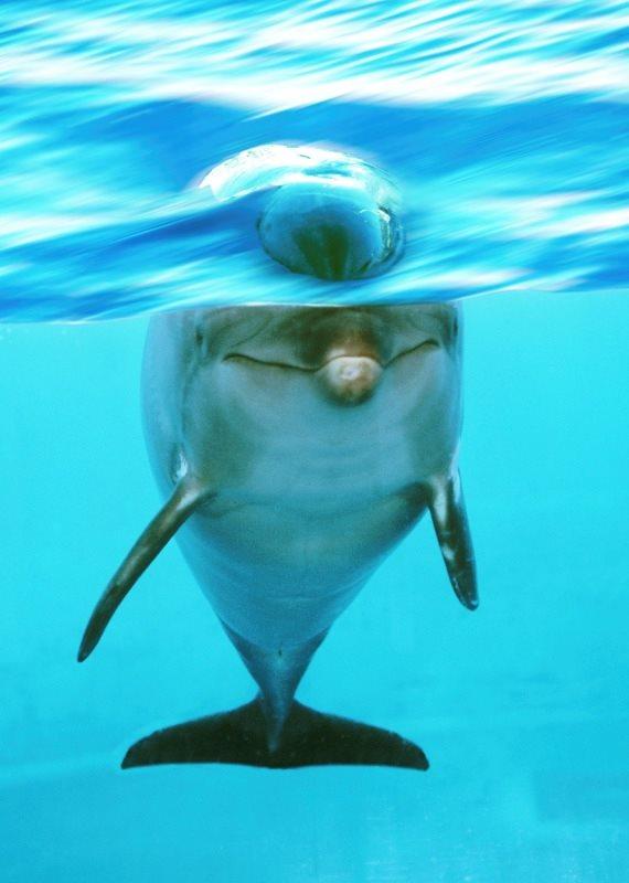 פרשת הדולפין המטרידן