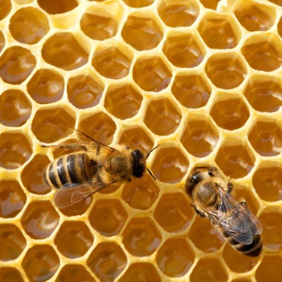 תופעת הגנבות בענף הדבש היא רחבה מאוד