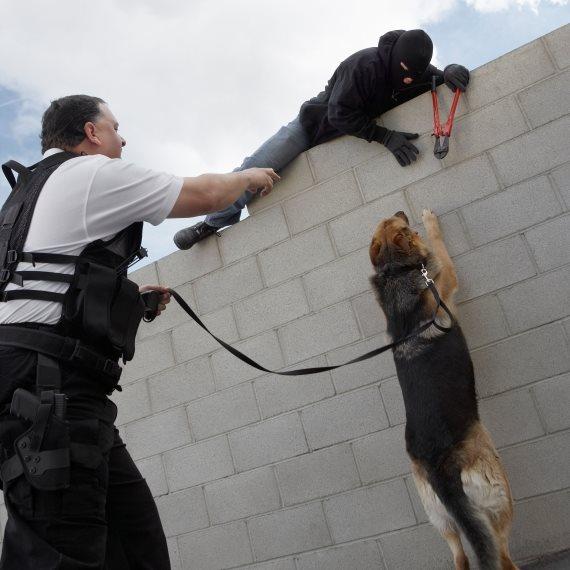 כלב משטרתי
