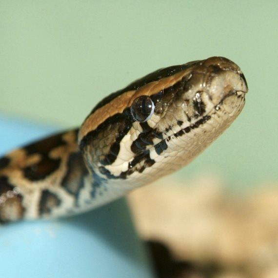 """""""אני אוהב את כל סוגי הנחשים"""""""