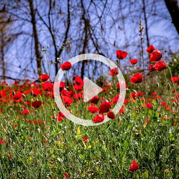 בין פרחי הגן