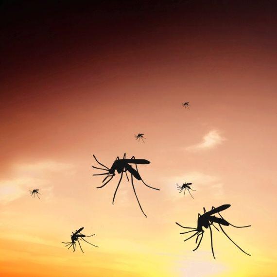 האם גוגל תחסל את כל היתושים בעולם?