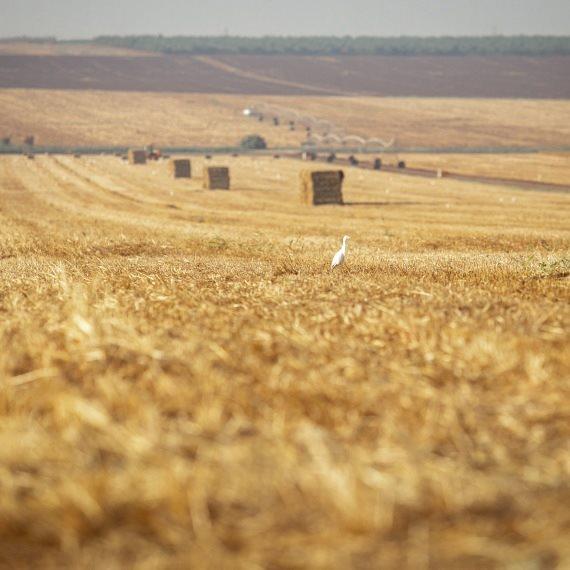 שדה חקלאי, ארכיון
