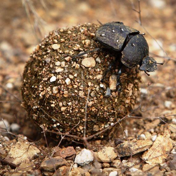 החיפושיות חולשות על ישראל