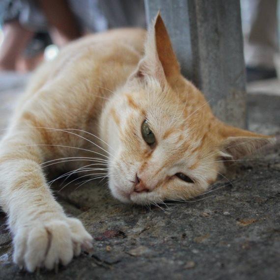 חתול שלא חוגג היום