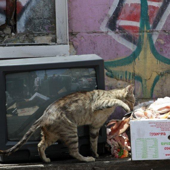 חתול שזקוק לעזרה