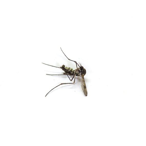 זהירות יתושים!