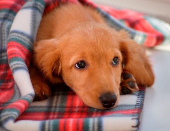 עדיף כלב חבר מאשר חבר כלב