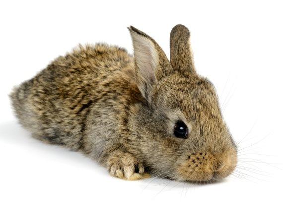 ארנבת שלא ישבה באקווריום