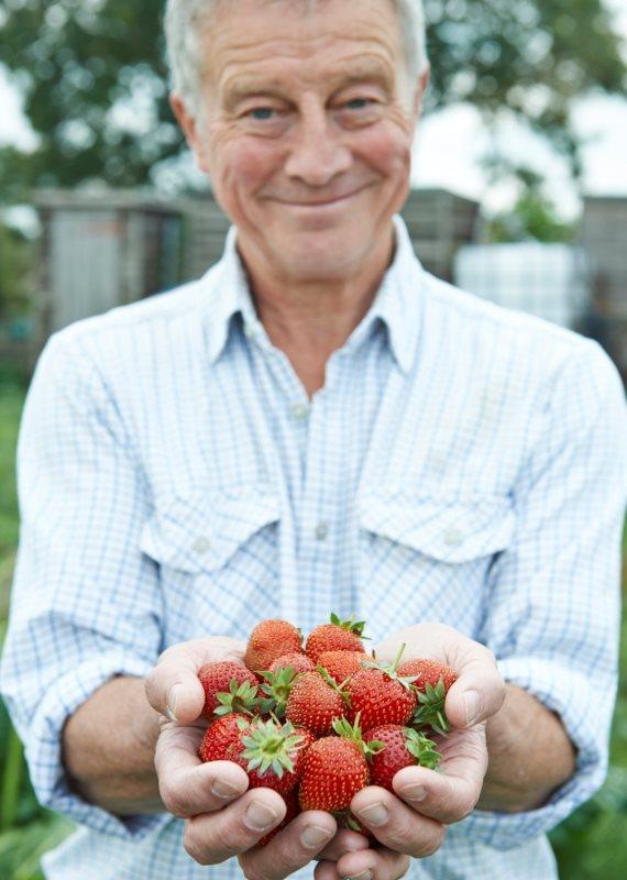 קטיף תותים