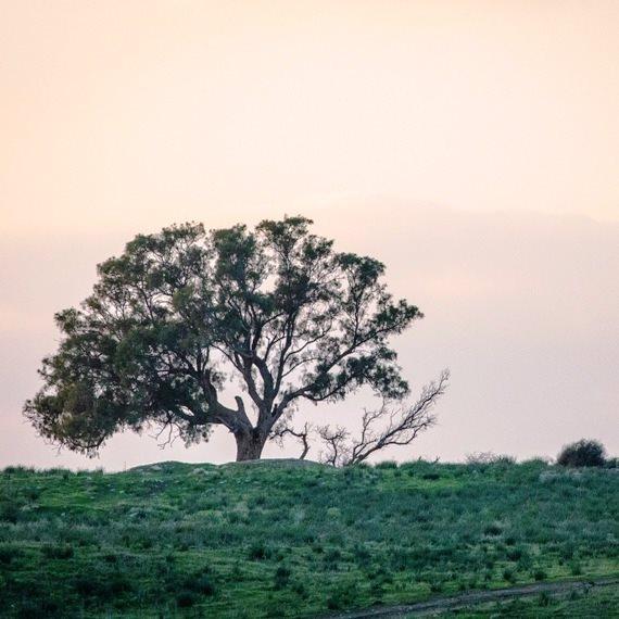 שומרים על העצים