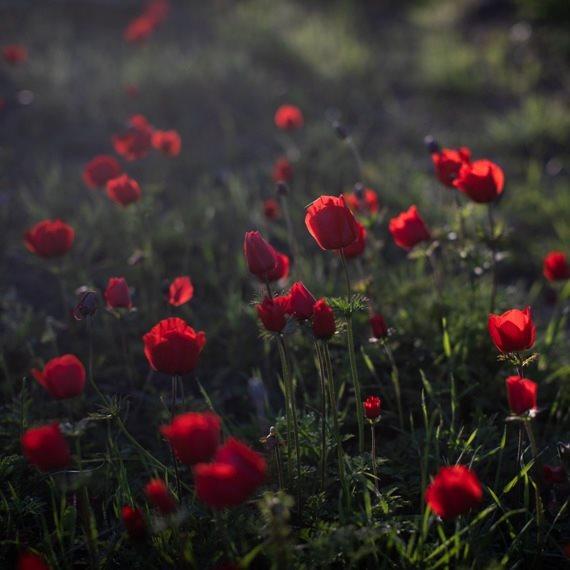 הזמן לפרחים