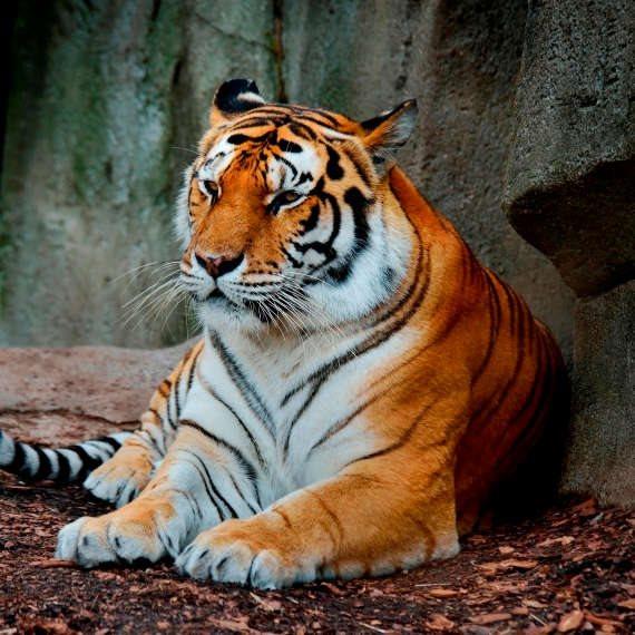 קורונה בגן החיות