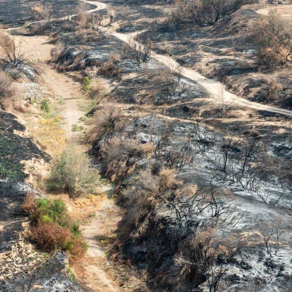 שדה חקלאי בעוטף עזה שנשרף