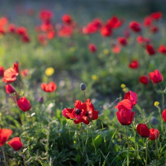 צמחים ללא השקעה