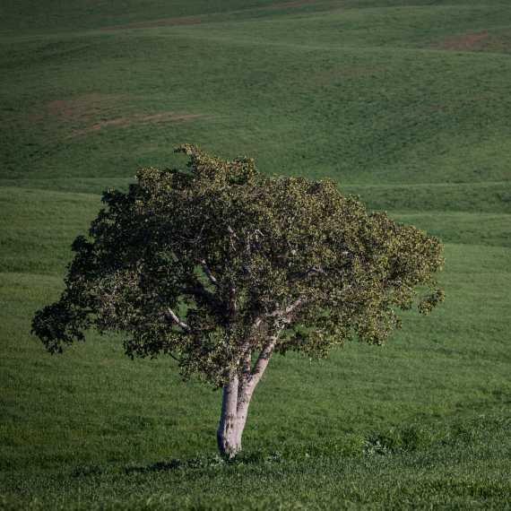 """""""לא לפגוע ולשמר עצים עוד ועוד"""""""