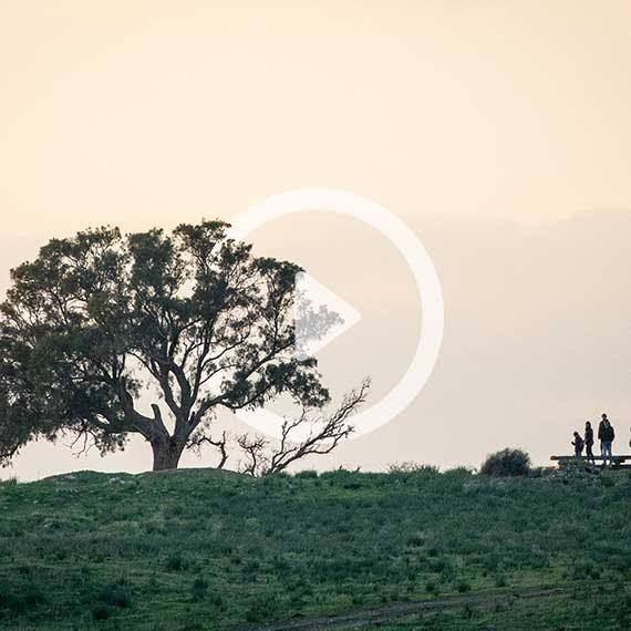 העץ הוא גבוה