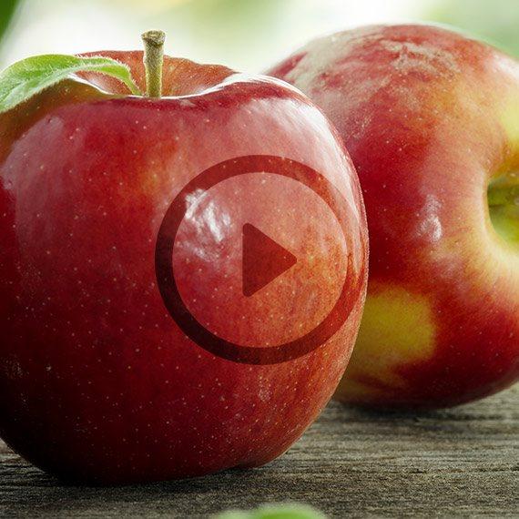 'ריח תפוח, אודם שני'