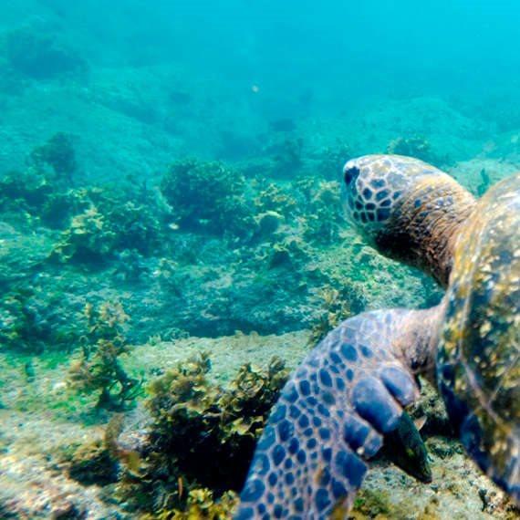 חופי הים בימים טובים יותר. למצולם אין קשר לנאמר