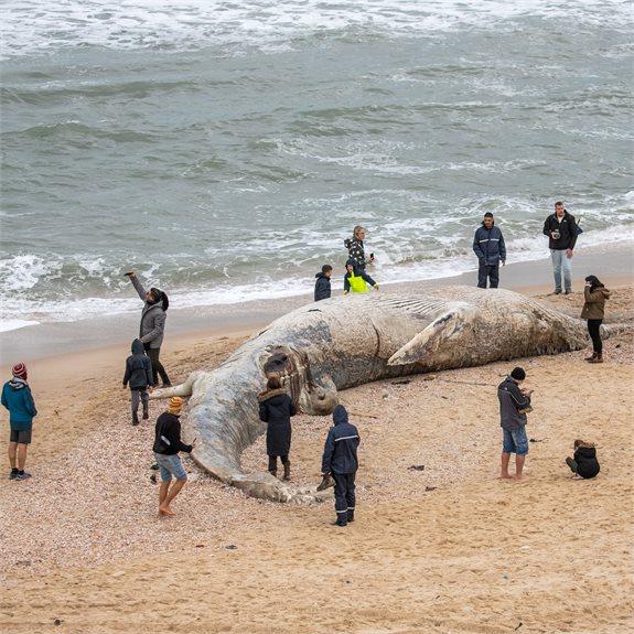 לויתן שמצא את מותו ונסחף לחוף בעקבות הזיהום
