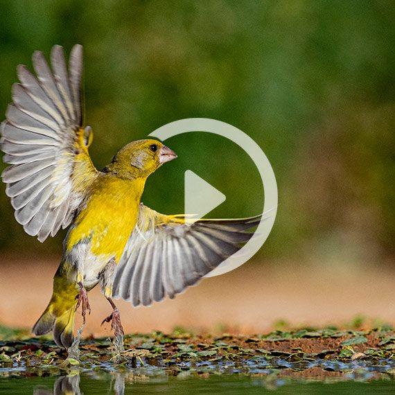 ציפור ירקון - בנגב, אשתקד