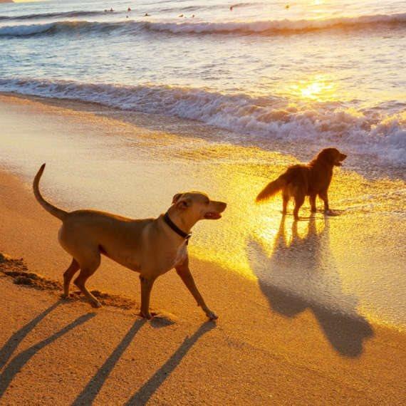 האהבה לכלבים שהפכה למקצוע