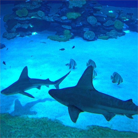 כרישים בחופי ישראל