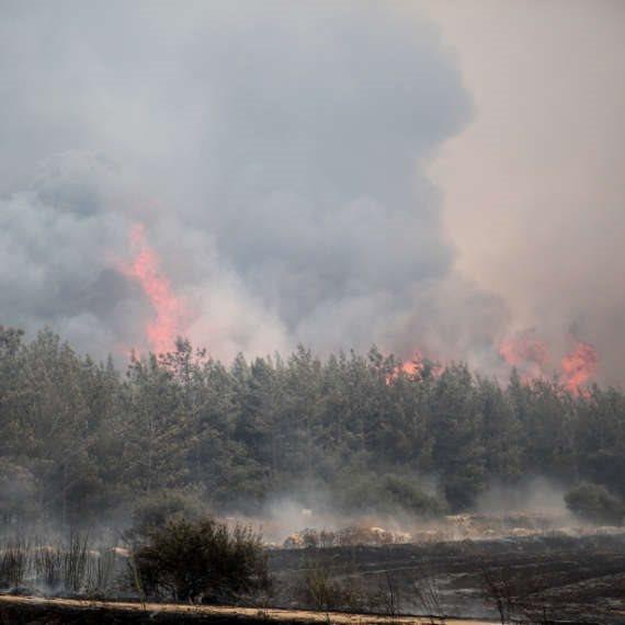 שריפה באזור ירושלים (ארכיון)