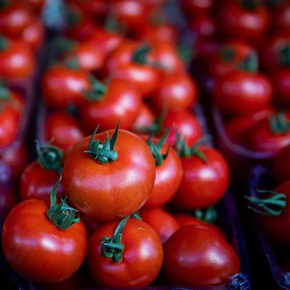 עגבניות או לא להיות
