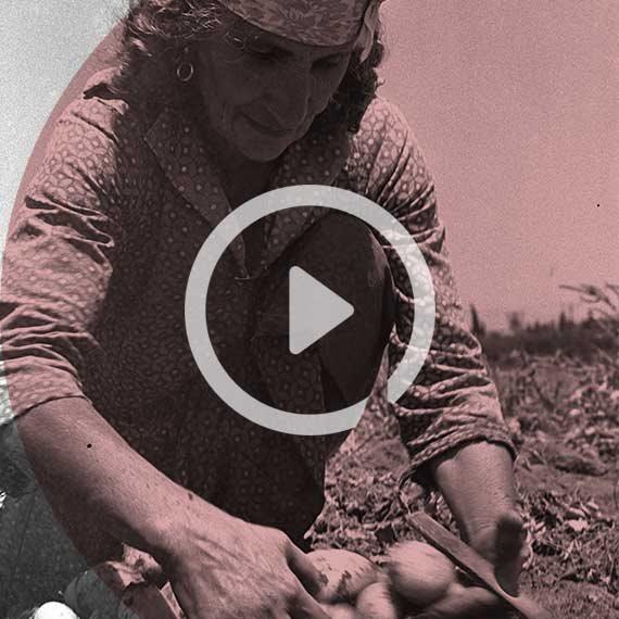 חקלאית בחדרה, שנות ה־50